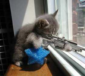 evilcat.jpg